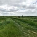 Waterjuffers_bij_Vos-14-1
