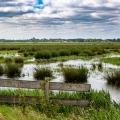 Waterjuffers_bij_Vos-69